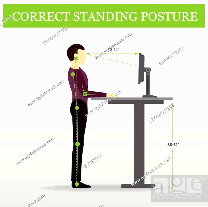 Stock Vector: ergonomic. Correct standing posture on height adjustable desk or table sitting and standing pose of a man. Healthy sitting pose.