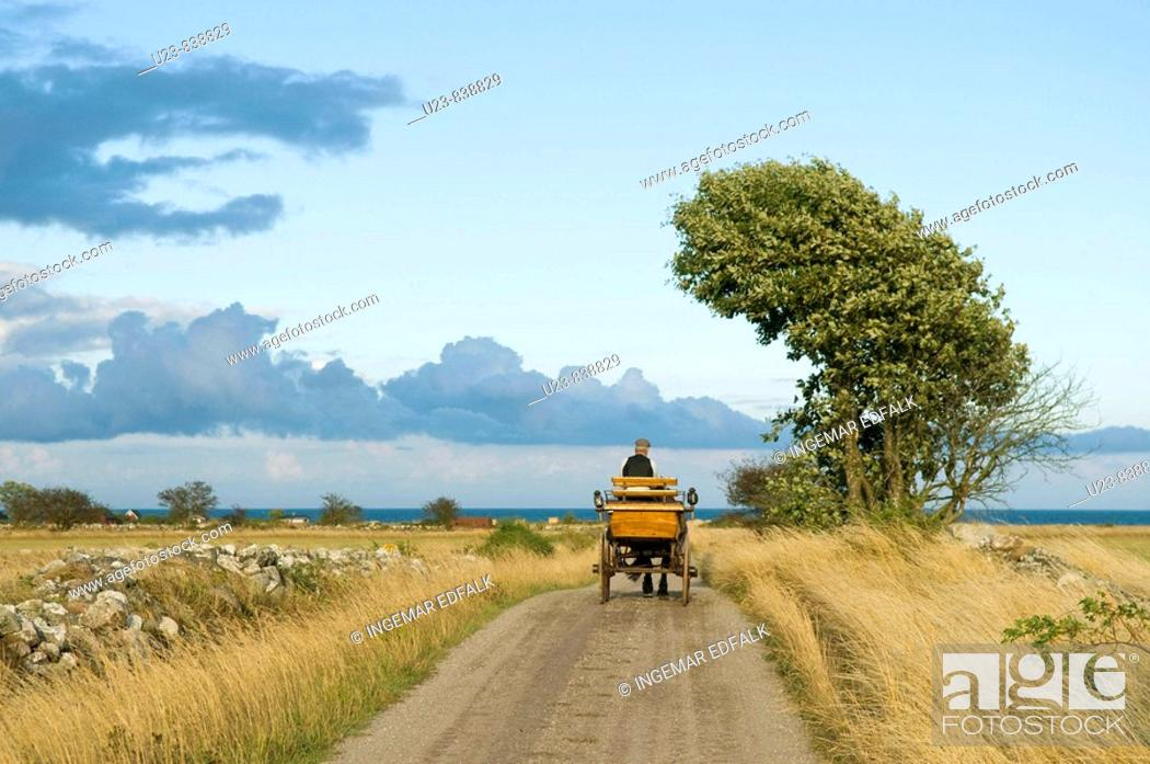 Stock Photo: Man driving a horsecart on a country road.