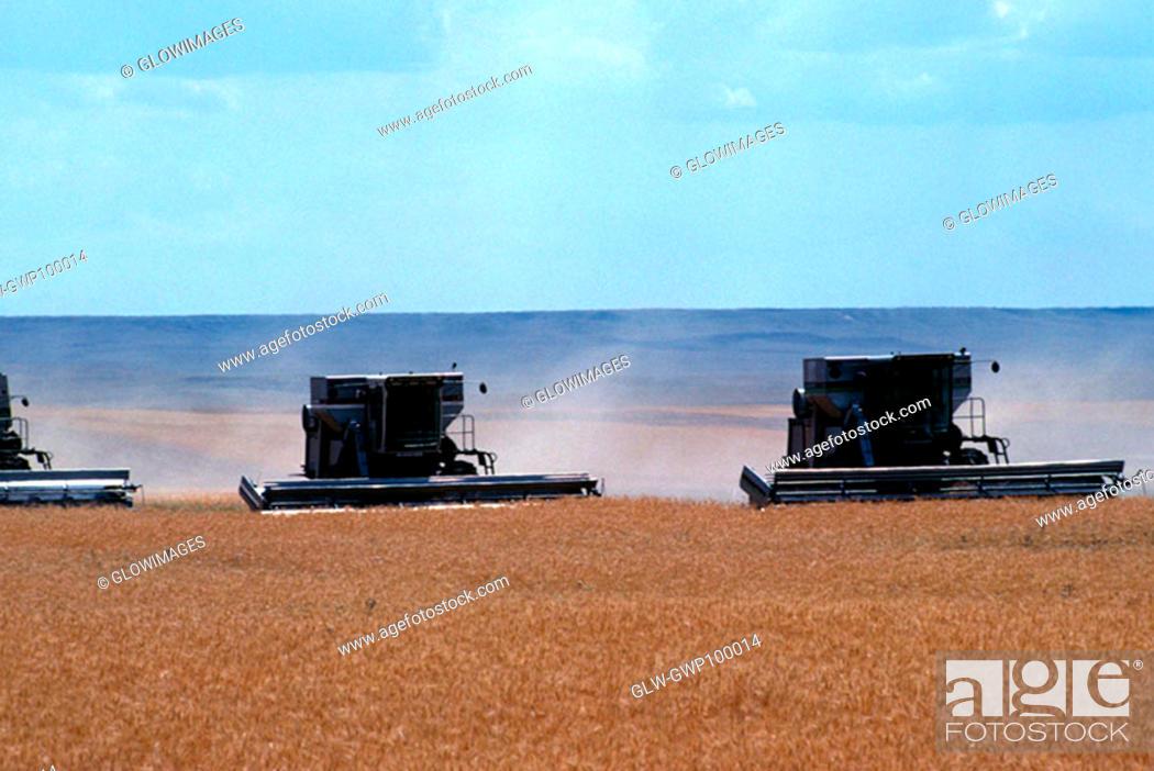 Stock Photo: Custom harvest combines harvest wheat near Cheyenne, WY.
