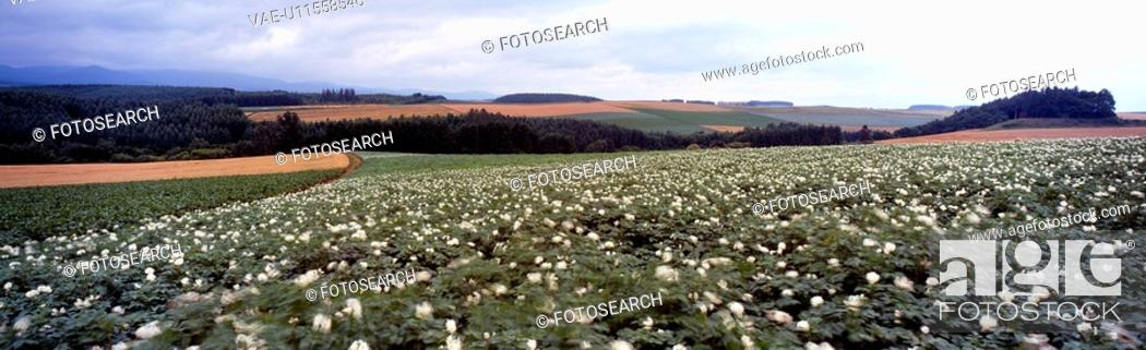 Stock Photo: farmland, wild flower, mountain, cloud, sky, flower.