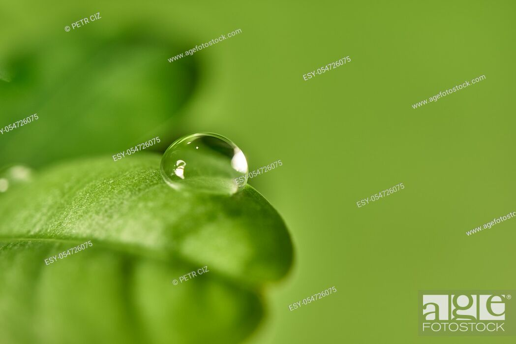 Stock Photo: Fresh green leaf with dew drops close up background.