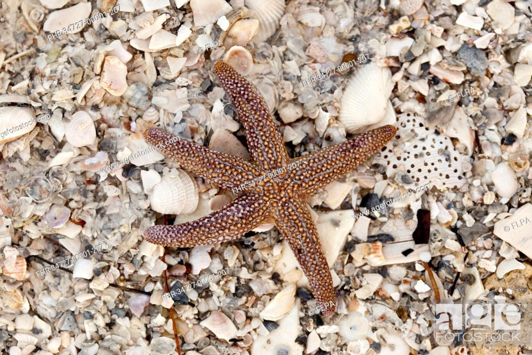how to find starfish in florida