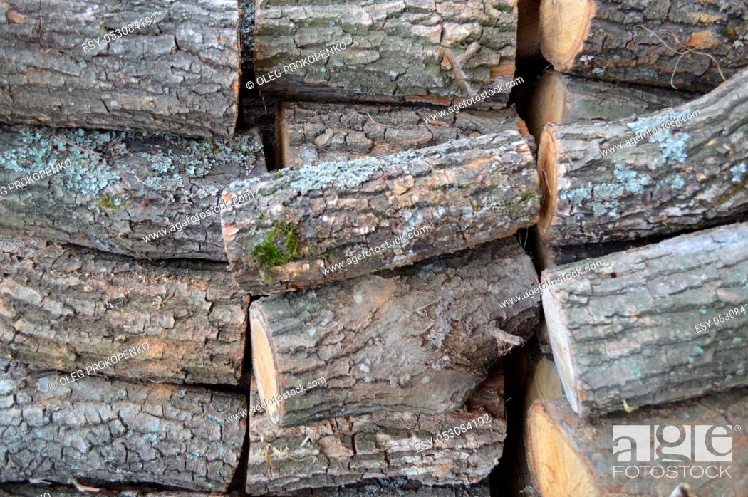 Stock Photo: Texture of various wood species close-up.