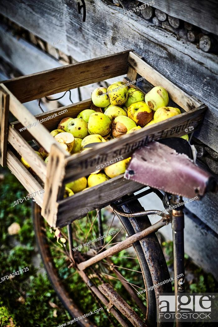 Stock Photo: Windfalls in a wooden crate on the luggage rack of an old bike.