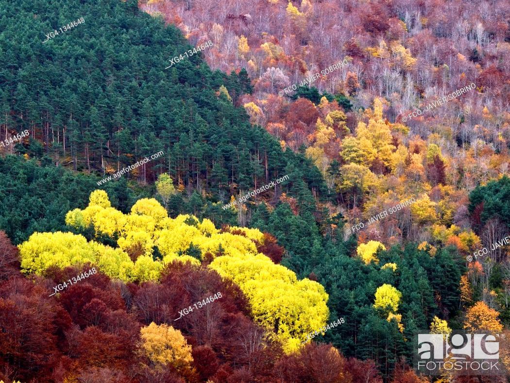 Stock Photo: Laderas de bosque mixto en otoño, en el valle del Monasterio de Valvanera - Anguiano - Sierra de la Demanda - Sistema Ibérico - La Rioja - España.