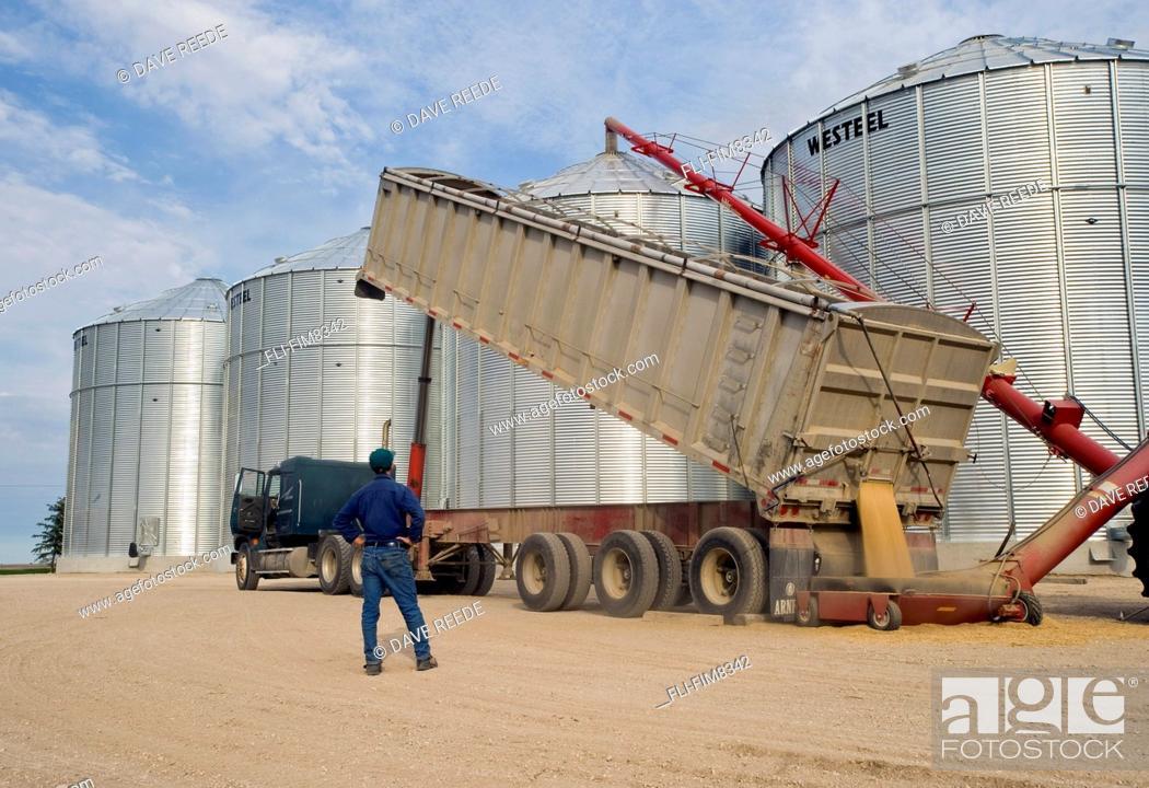Imagen: Man looks on as oats are augered into a grain storage bin, near Lorette, Manitoba.