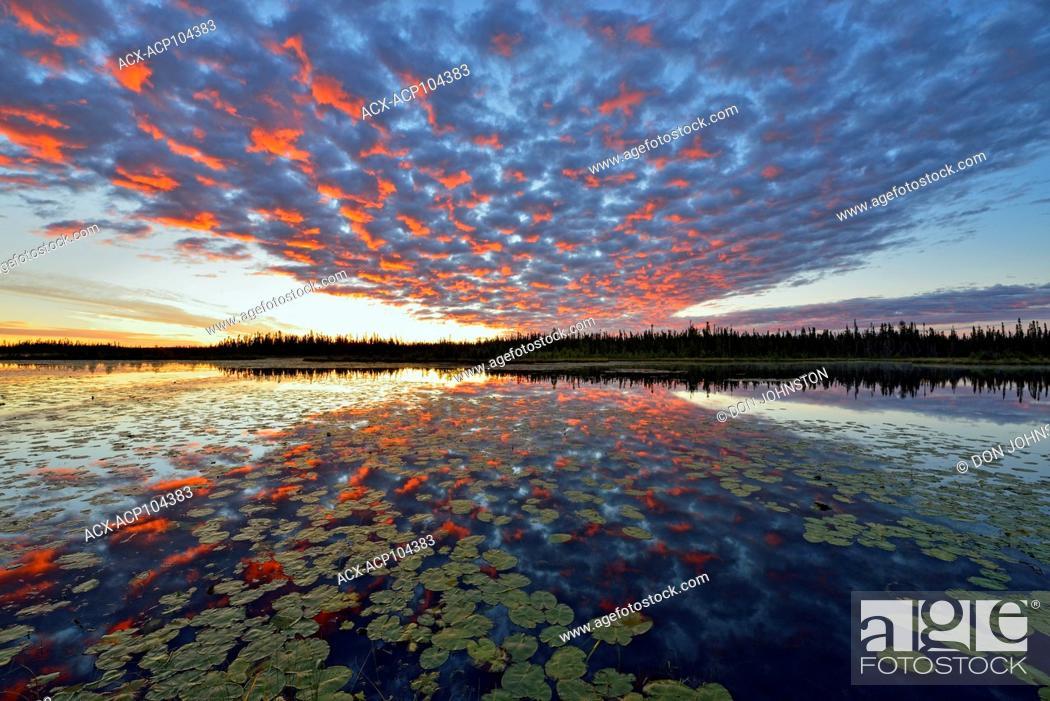 Stock Photo: Dawn skies reflected in a beaver pond, Wood Buffalo National Park, Alberta, Canada.
