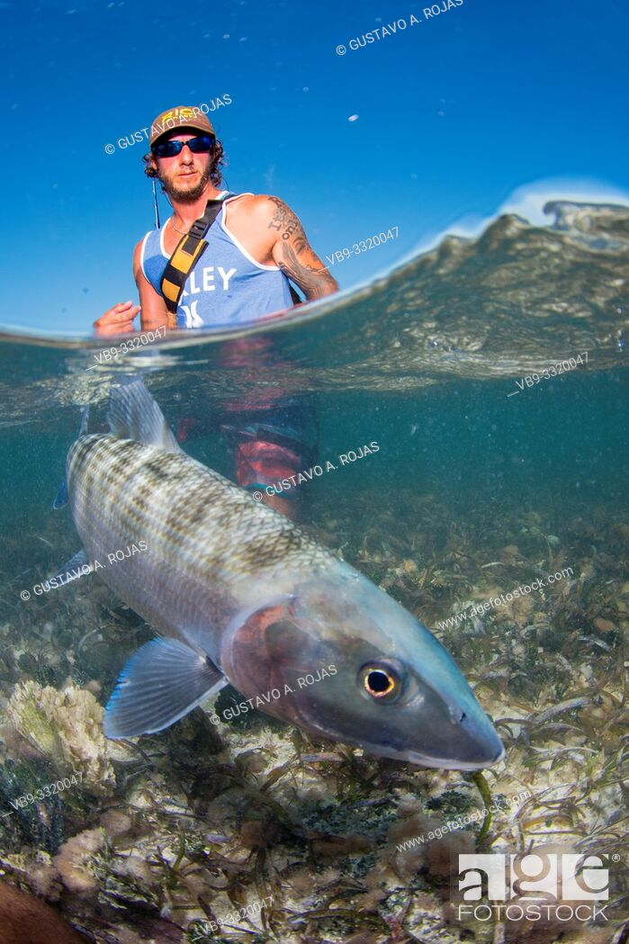 Stock Photo: Over/under type shot SPLIT off man hold a BIG BONEFISH underwater saltwater fly fishing los roques venezuela.