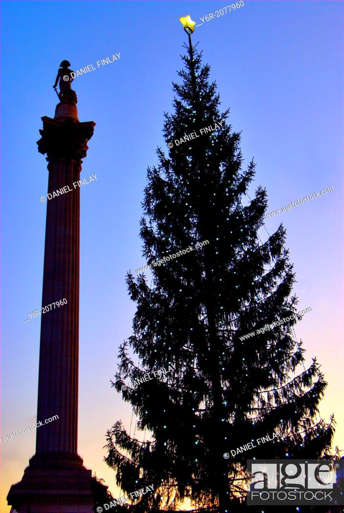 Stock Photo: The Christmas tree in Trafalgar Square in the heart of London England over the Christmas period. It is an annual gift from Norway in gratitude for liberation in.