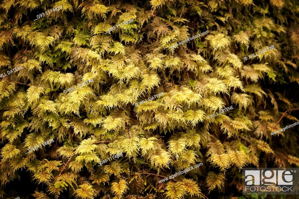 Stock Photo: close up of moss.