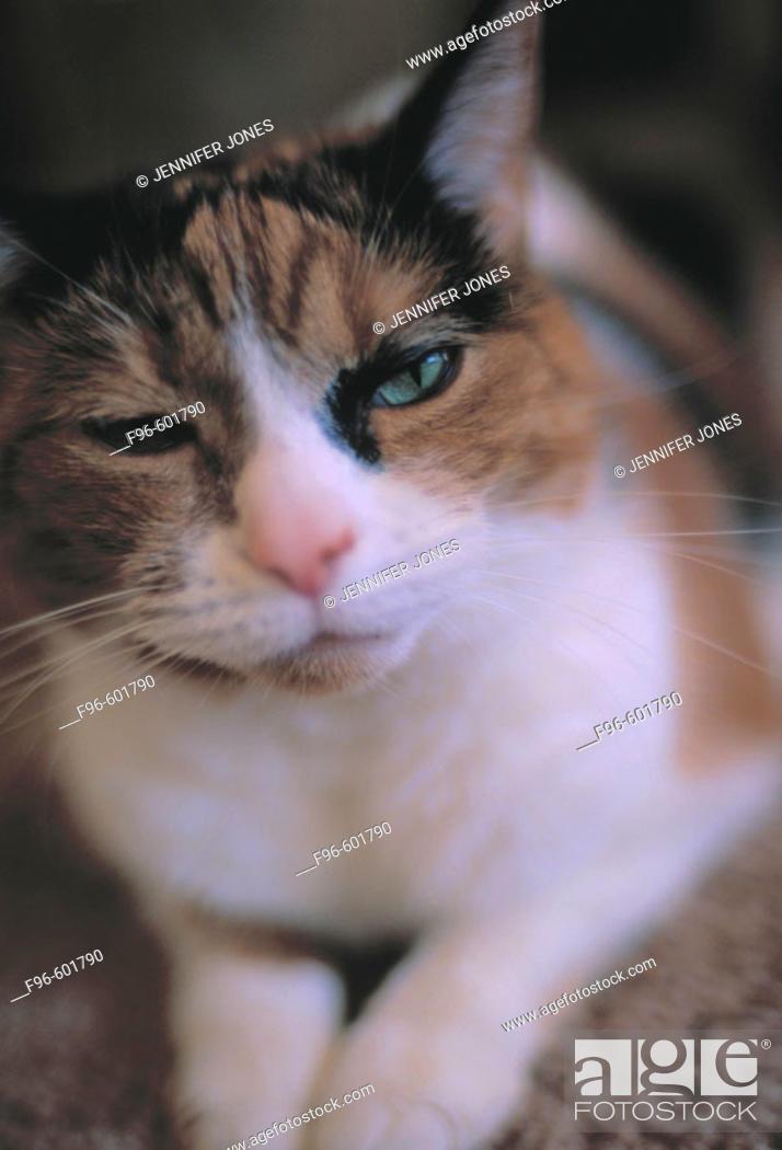 Stock Photo: Calico cat.