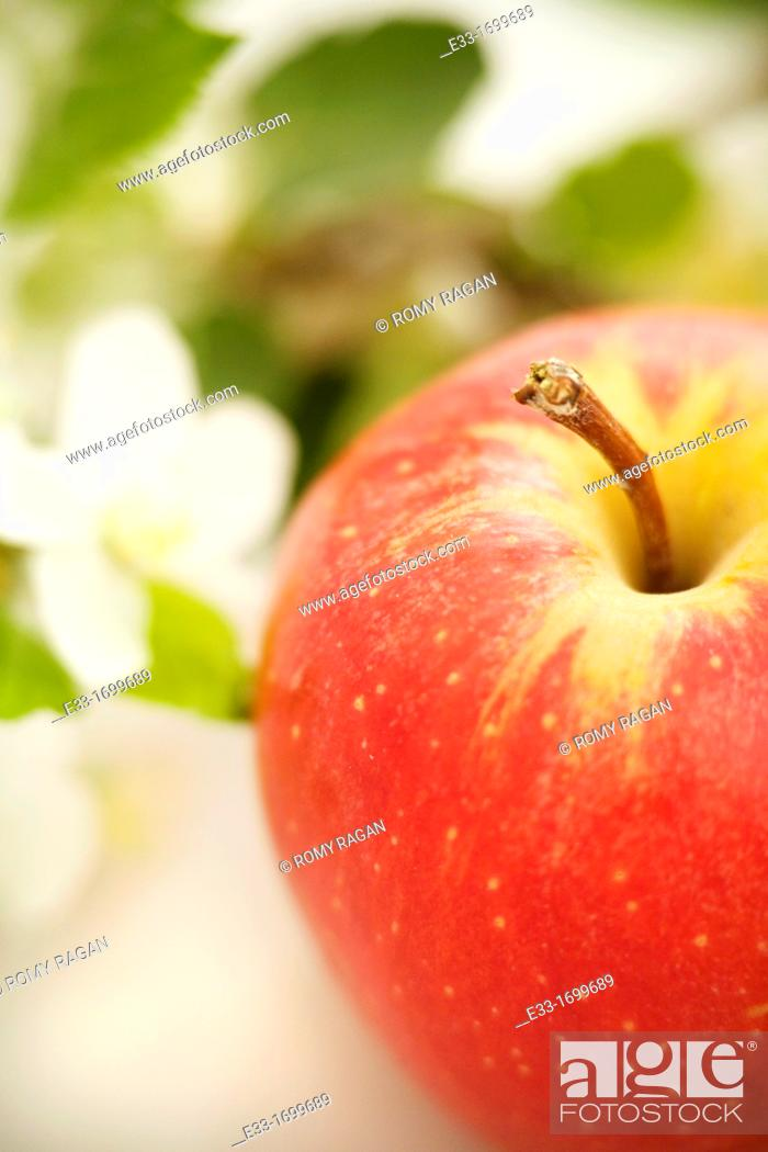 Imagen: Organic apple with blossoms.