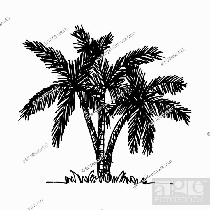 Stock Vector: doodle coconut tree icon hand draw illustration design.