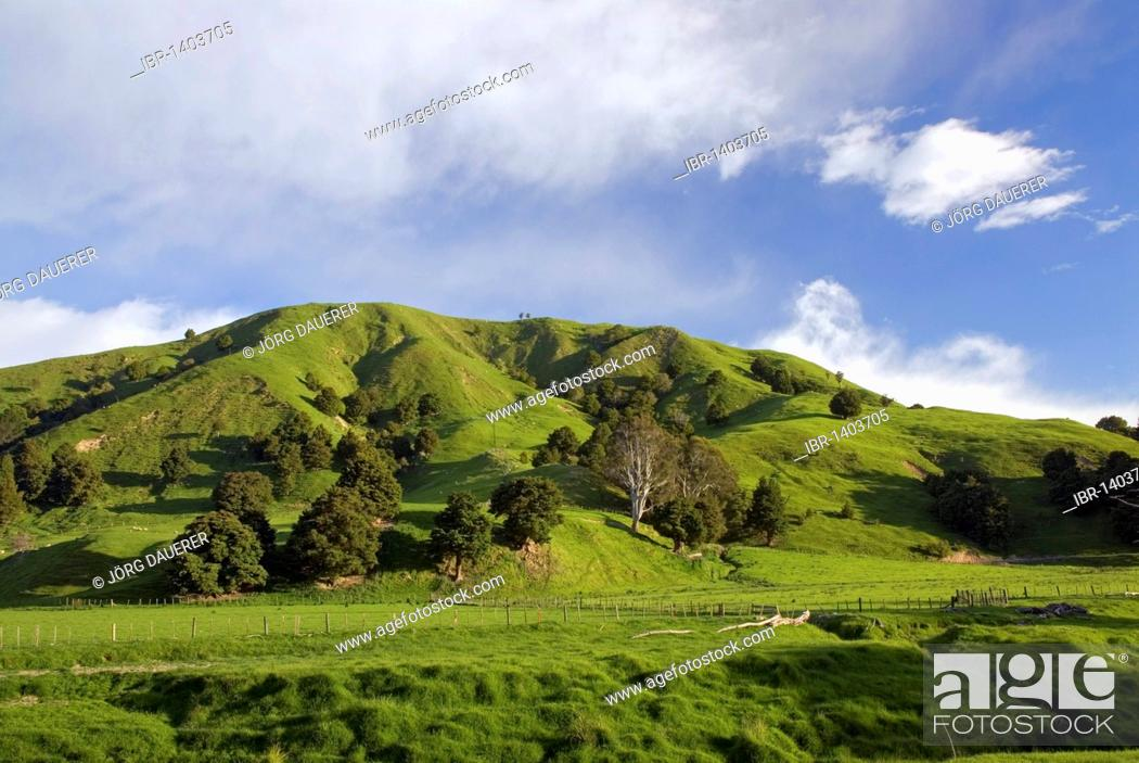 Stock Photo: Green rolling farmland near Castlepoint, Wellington in the southern part of the North Island of New Zealand.