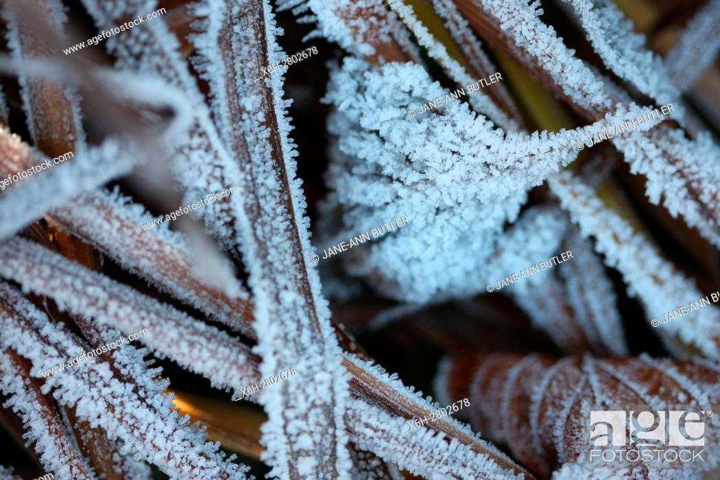 Stock Photo: the onset of winter, cold morning frost.