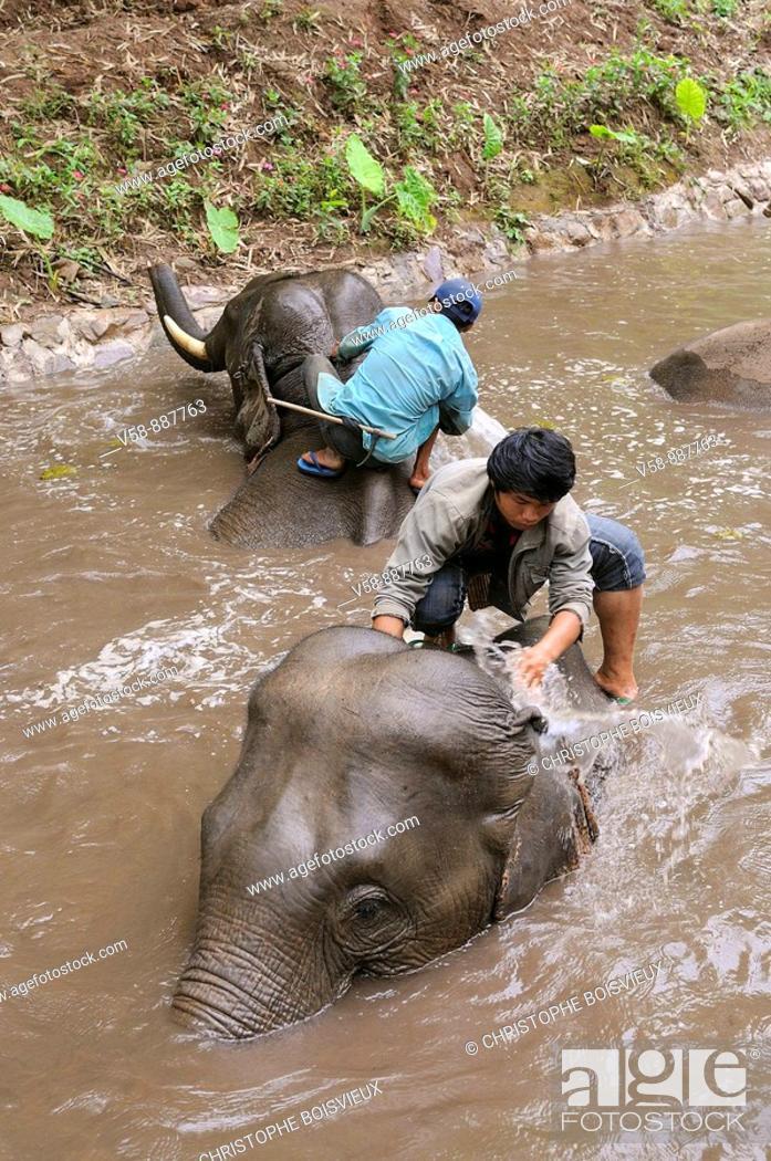 Stock Photo: Elephant bath, Mekong Elephant camp, Pakbeng, Oudomxay province, Laos.