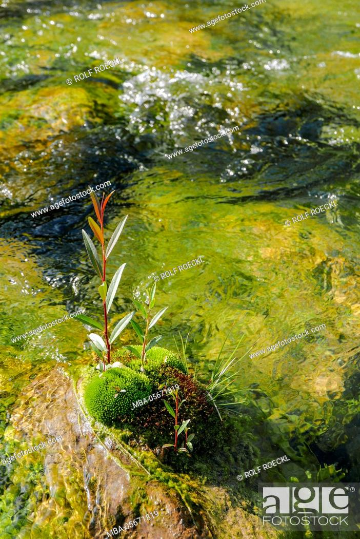 Stock Photo: colourful play of water of the Mangfall with moss with Kolbermoor, Upper Bavaria.