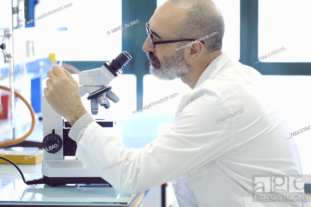 Imagen: Mature scientist male in his 50s wearing a lab coat looking through a microscope in a laboratory. Basque Country, Spain, Europe.
