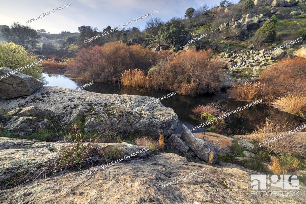 Stock Photo: River Alberche and vegetation in winter time. Cebreros. Avila. Spain. Europe.