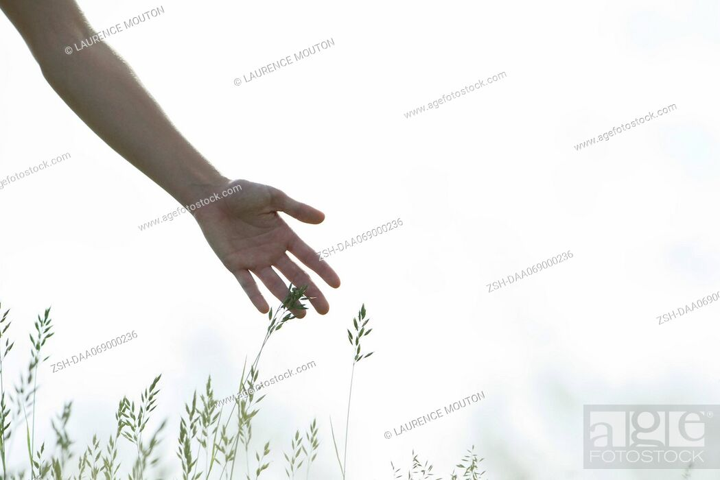 Stock Photo: Young woman's hand touching tall grass.