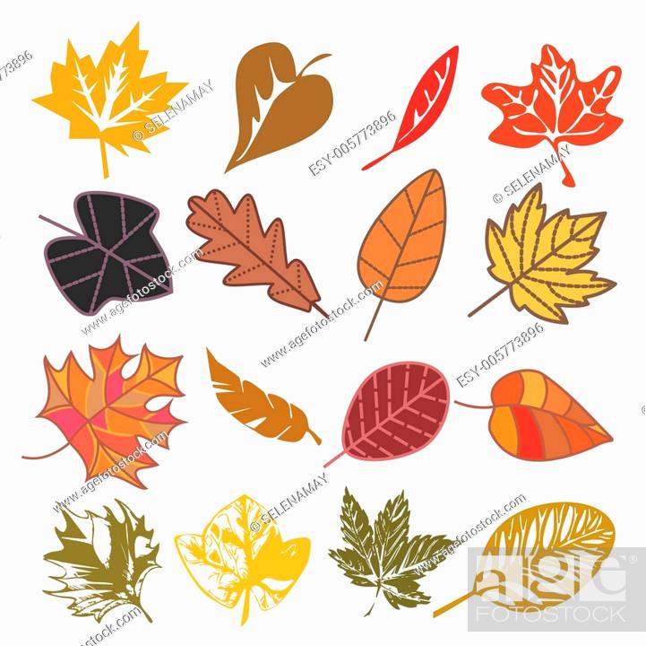 Stock Vector: set of autumn leaves.