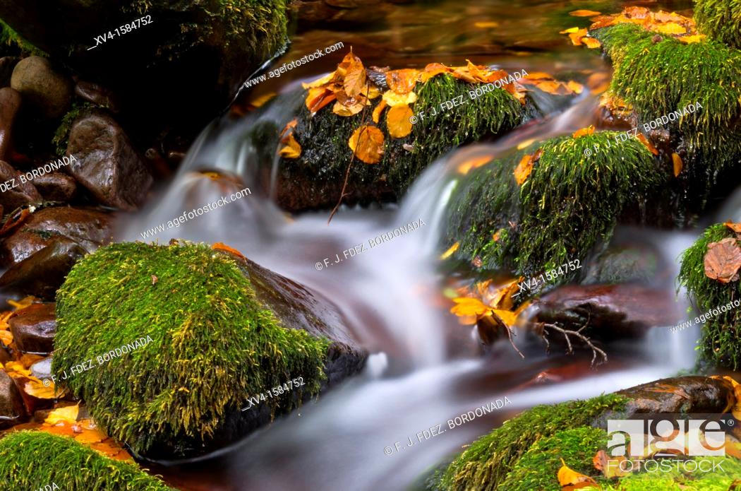Stock Photo: Autumn forest in Arce Valley, Navarre Pyrenees, Spain.