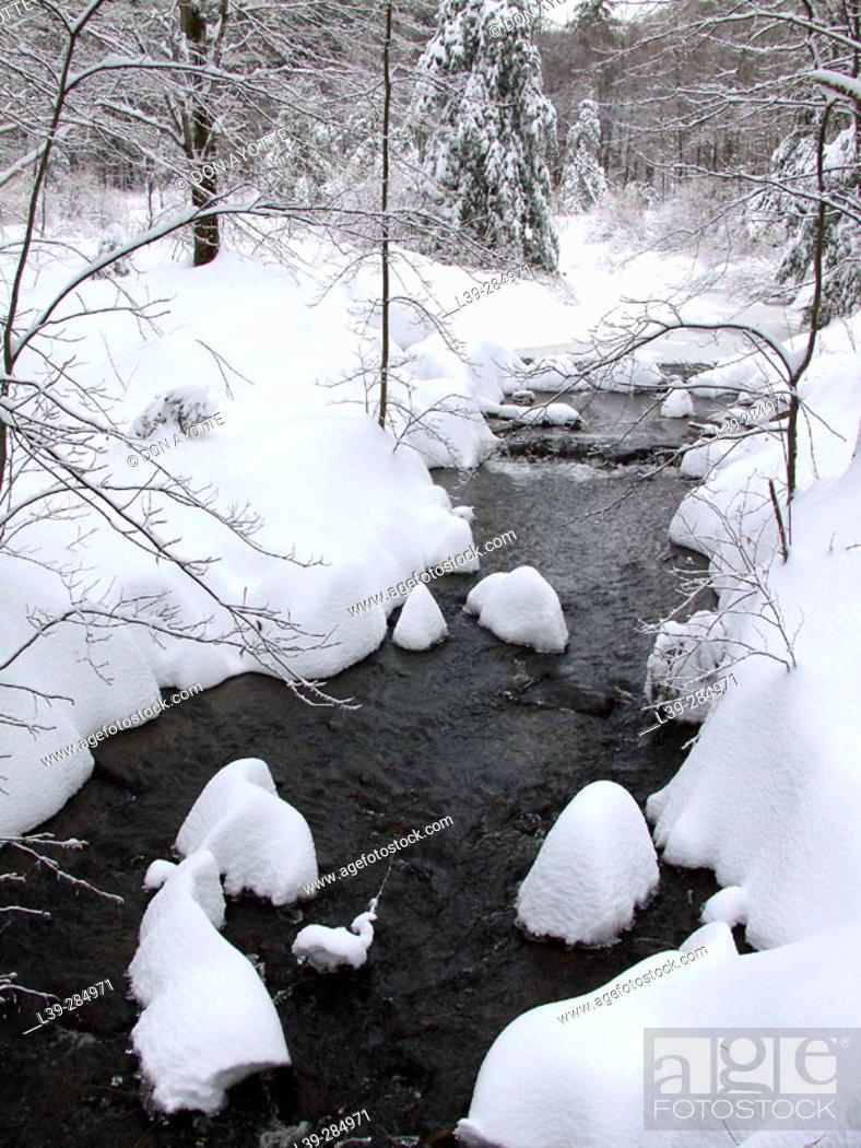 Stock Photo: Woods in winter.
