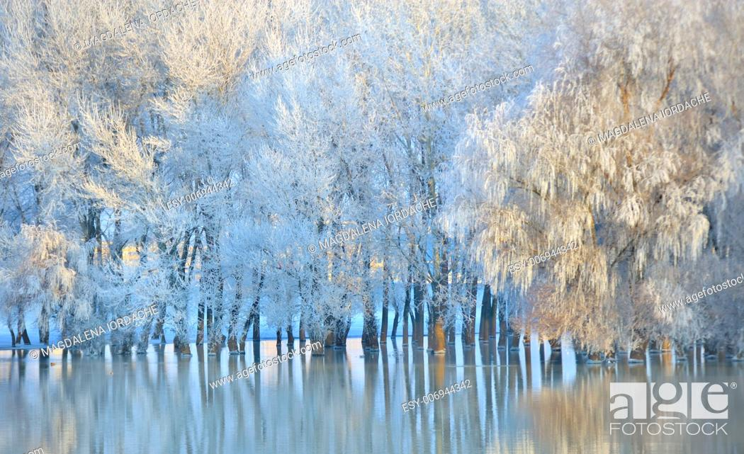 Stock Photo: Frosty winter trees on Danube river.