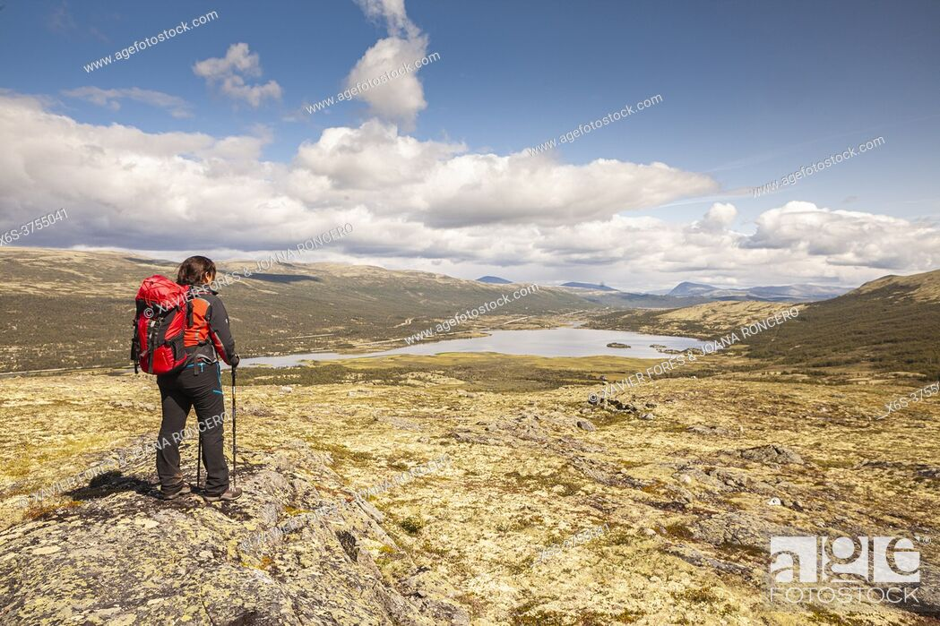 Imagen: Hiking in Mehørunden, Dovrefjell National Park, Oppland, Norway.
