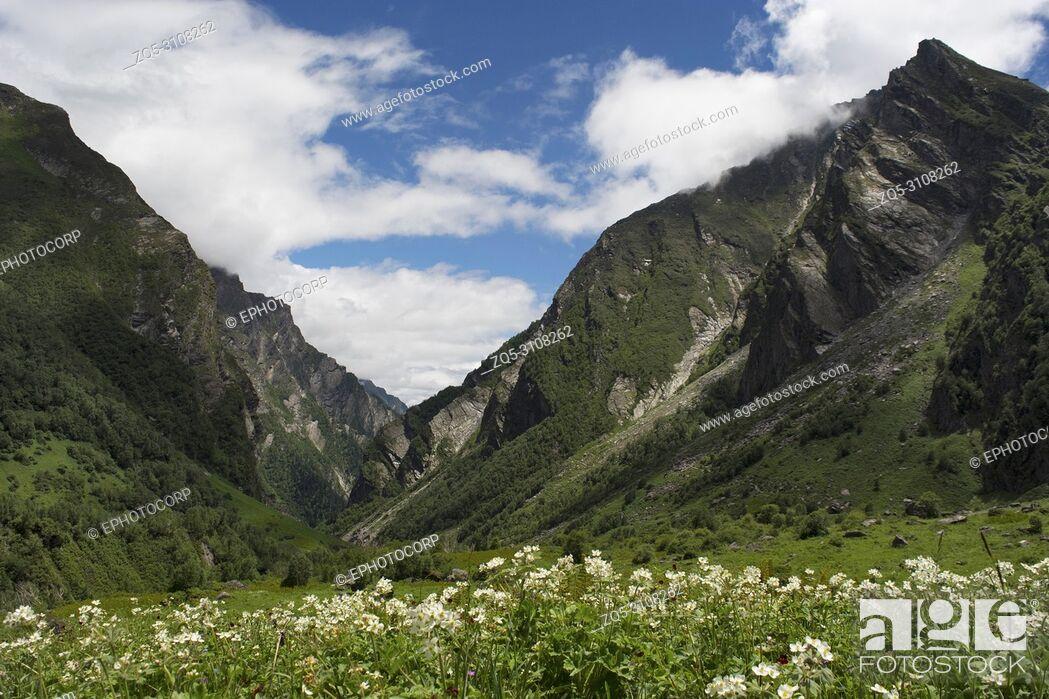 Stock Photo: Landscape with mountain backdrop, Valley of Flowers, Uttarakhand, India.