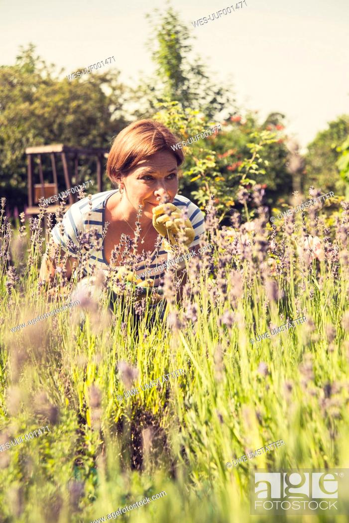 Stock Photo: Mature woman smelling at lavender in garden.