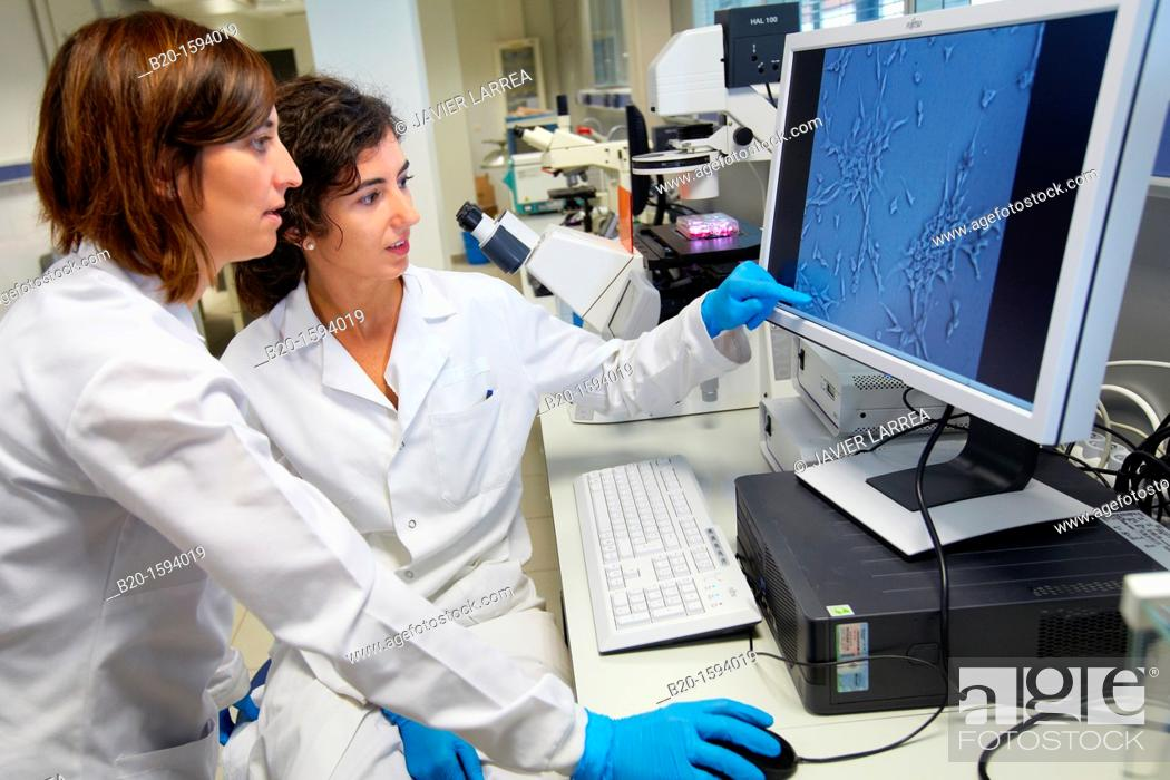 Stock Photo: Inverted optical microscope  Laboratory instrumentation  Photographic analysis of the growth of cell lines made with the inverted optical microscope.