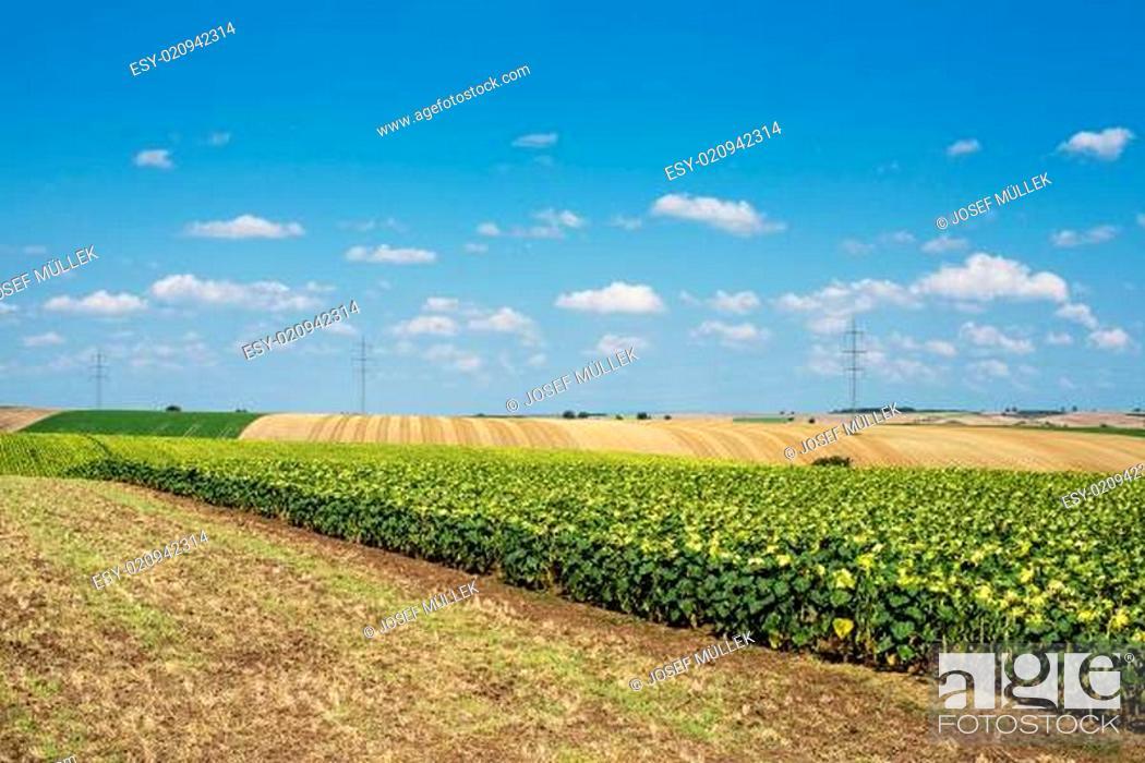 Stock Photo: Landschaft Landwirtschaft.
