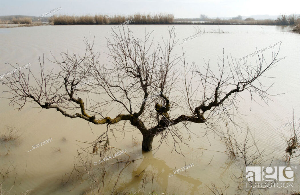Imagen: Ebro River floodings. Feb. 2003. Pina de Ebro, Zaragoza province. Spain.