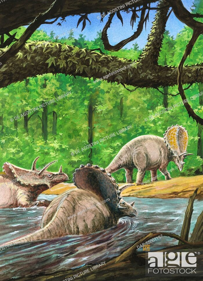 Stock Photo: Pentaceratops sternbergii, Ceratopsidae, Late Cretaceous. Artwork by J Dang.