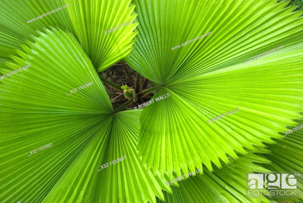 Stock Photo: Elegant palm fronds.