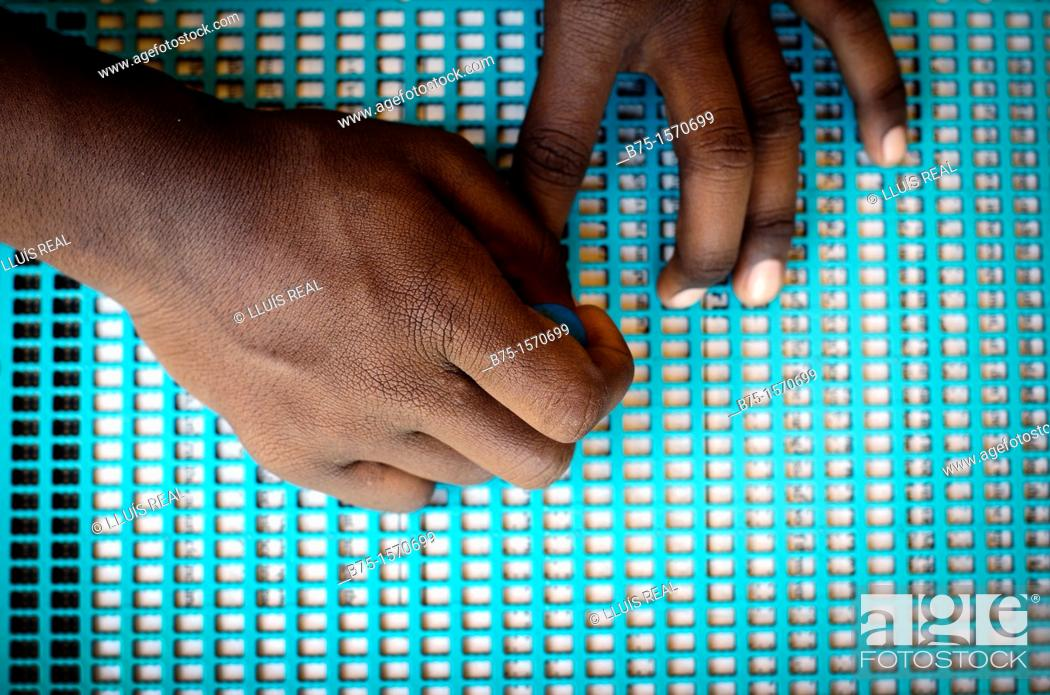 Photo de stock: India, Mundog, Blind Hospital, woman writing Braille.