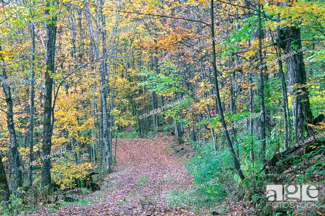Stock Photo: Forest-path, Mt-Orford-National-Park, Québec, Canada.