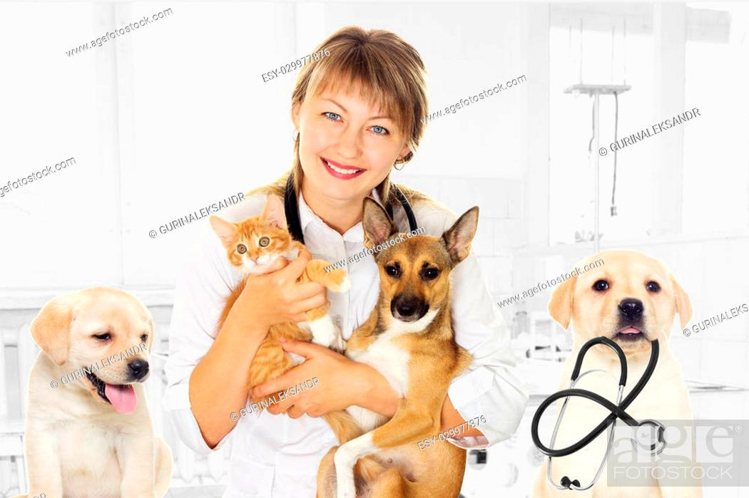 Stock Photo: smiling vet and puppy and kitten in clinic.