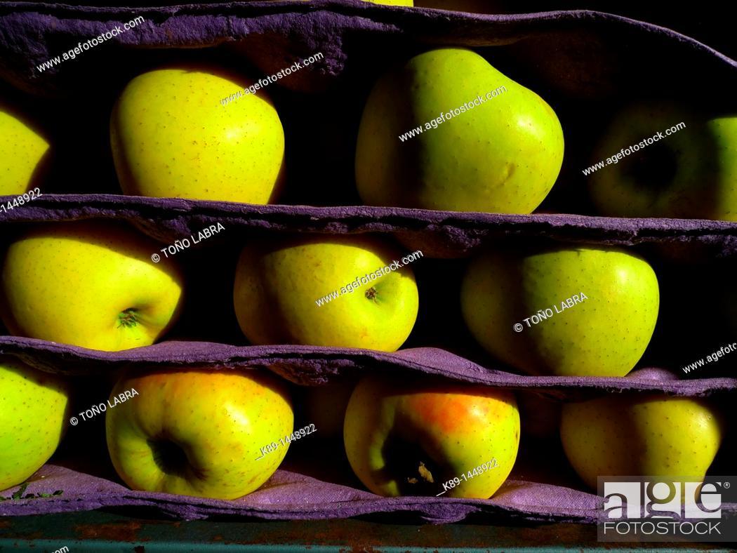Stock Photo: Apples Malus sylvestris Mill.