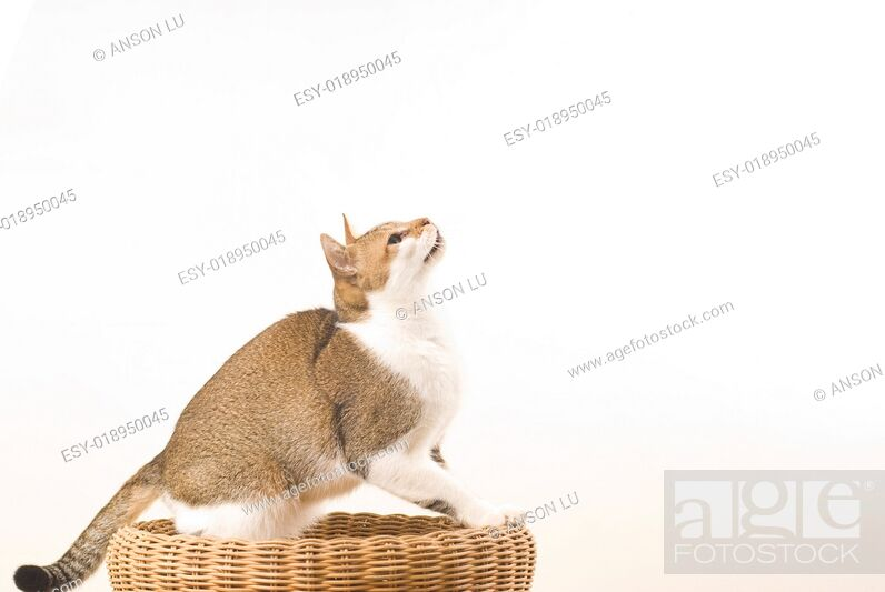 Stock Photo: Cat prepare for jumping.