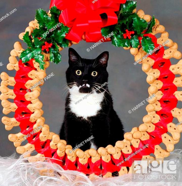 Stock Photo: Cat with dog bone Christmas wreath.