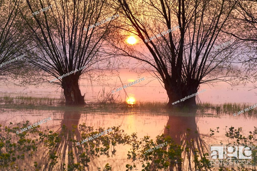 Stock Photo: Spring floodwaters of Biebrza River, sunrise, Biebrza National Park, Poland, Europe.