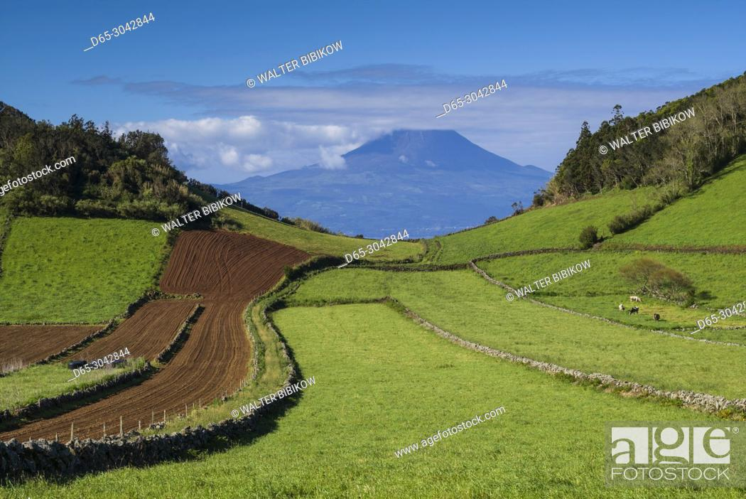 Stock Photo: Portugal, Azores, Sao Jorge Island, Rosais, elevated view of fields and the Pico Volcano.