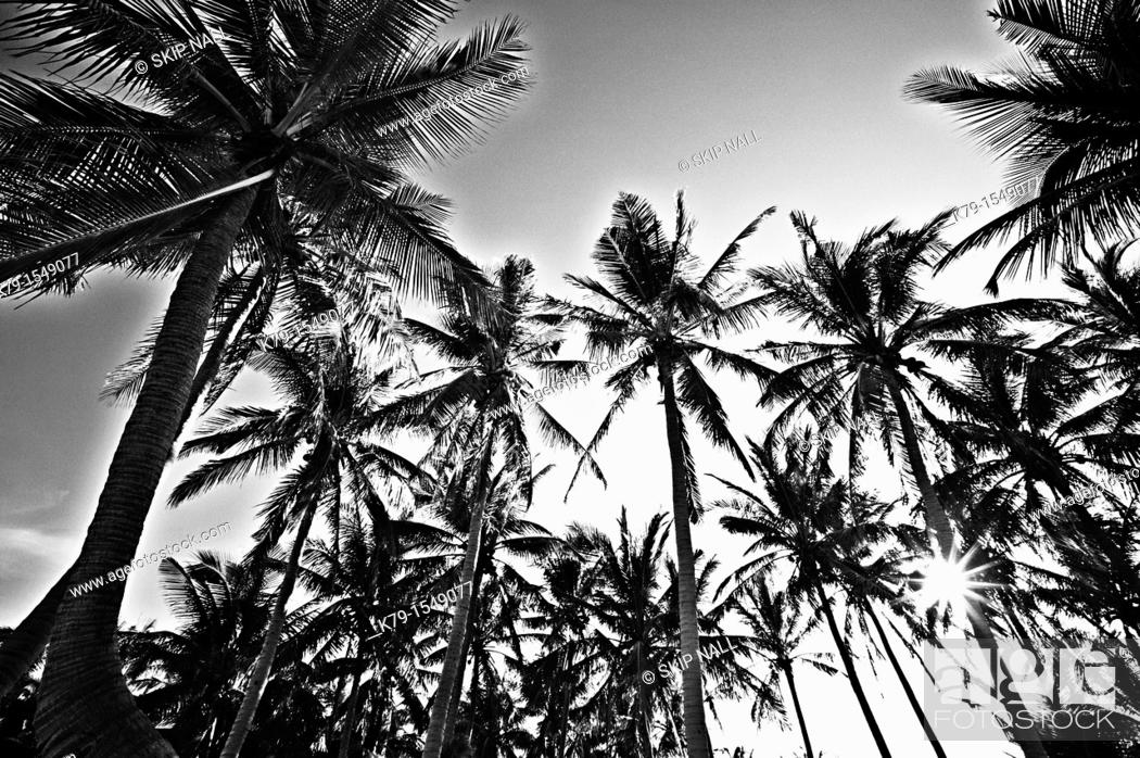 Stock Photo: Palm trees on tropical island.