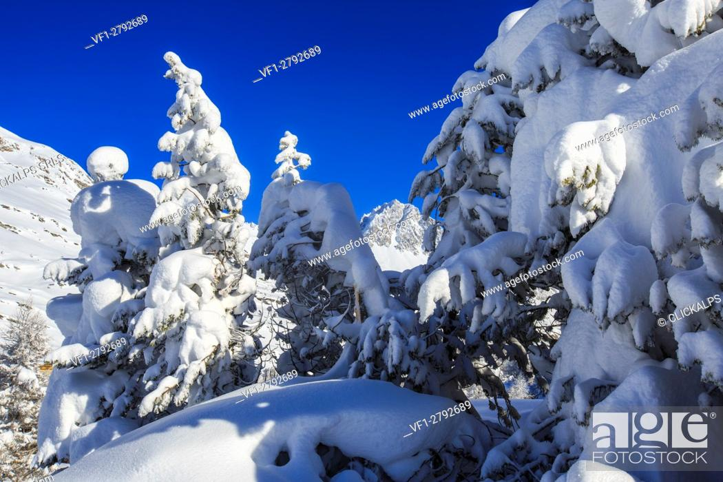 Stock Photo: The winter sun shines on the snow covered woods and the landscape around Maloja Canton of Graubünden Engadine Switzerland Europe.