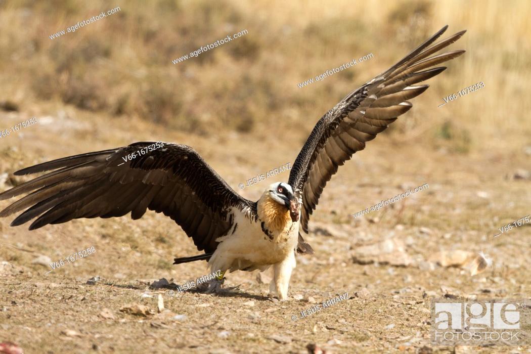 Imagen: Osprey.