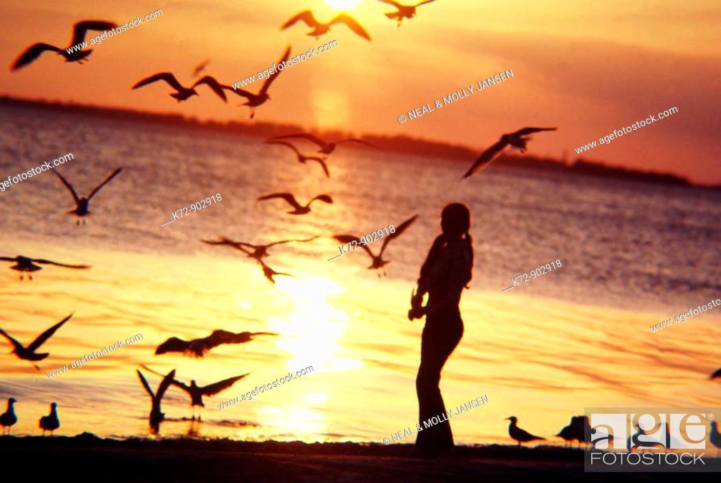 Stock Photo: Feeding Seafulls at sunset.