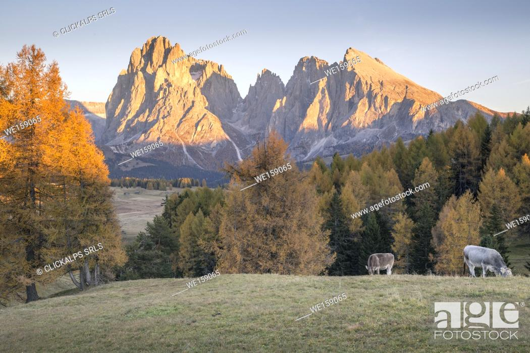 Stock Photo: Alpe di Siusi with Mount Sassolungo and Mount Sassopiatto on yhe background, South tyrol, Italy.