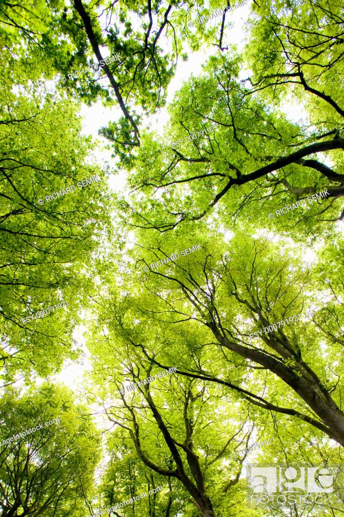 Stock Photo: forest, Brittany, France.